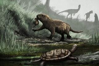 I mammiferi vivono di giorno dalla scomparsa dei dinosauri: prima era notturni per paura