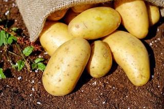 La patata d'oro che fa bene alla salute e riduce il rischio di morte è (anche) italiana