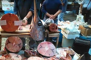 Pesca illegale di pesce spada: stiamo svuotando il nostro mare e danneggiando l'economia