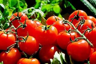 Pomodori 'fluorescenti' utilizzati come carburanti: nuovi nanomateriali low cost