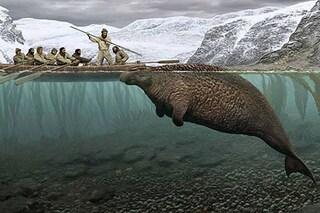 I resti di un gigante estinto dall'uomo sono riemersi in Russia: chi è la ritina di Steller