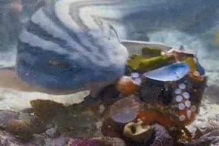 Il polpo fa uno scudo di conchiglie per proteggersi dallo squalo: la lotta violenta