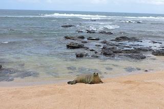 Tre foche trovate in condizioni disperate, oggi sono libere, in salute e felici: le foto