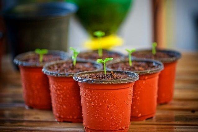 Per un pugno di raggi di sole: così le piante 'fanno rissa' tra loro