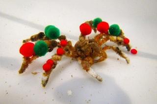 I granchi decoratori si addobbano come alberi di Natale per nascondersi ai predatori