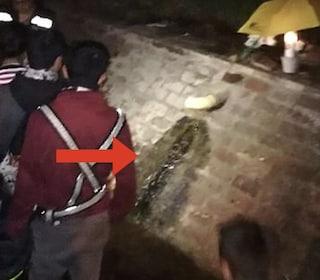 La Vergine Maria appare in Colombia, è il miracolo della pareidolia