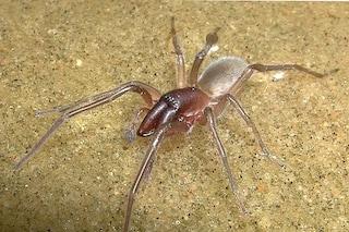 Cosa c'entra questo ragno con Bob Marley