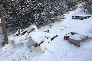 Adolescenti uccidono mezzo milione di api: 50 alveari distrutti e lanciati nella neve