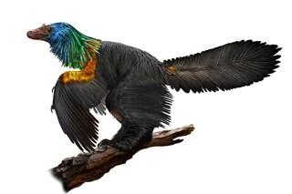 Arcobaleno con la grande cresta: il nuovo dinosauro scoperto per caso fa invidia ai colibrì