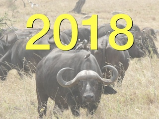 Previsioni Bufale 2018: attese piogge di panzane in Rete