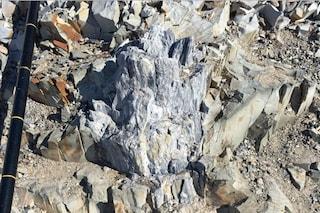 Una foresta invece del ghiaccio: com'era l'Antartide 260 milioni di anni fa
