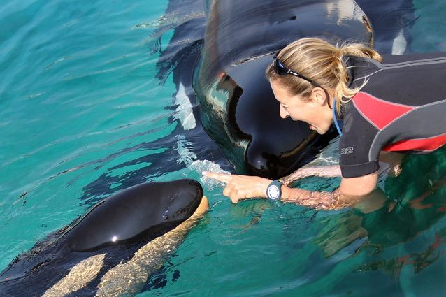 L'orca Wikie con sua figlia