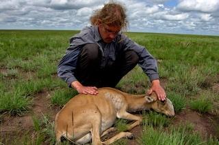 Così abbiamo ucciso 200mila antilopi in via d'estinzione in tre sole settimane