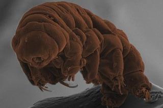 I cambiamenti climatici uccidono anche i tardigradi, gli animali più resistenti della Terra