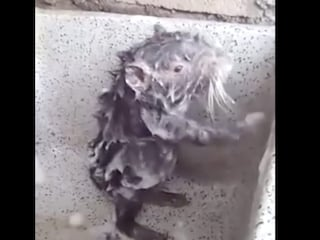 """""""Un topo si fa la doccia"""", ma la realtà non è affatto divertente"""