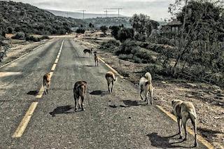 Chi ha avvelenato e ucciso i cani randagi a Sciacca? Noi, e continuiamo a farlo