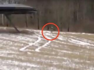 Alieno passeggia in una radura, ma viene stanato dalla sua ombra