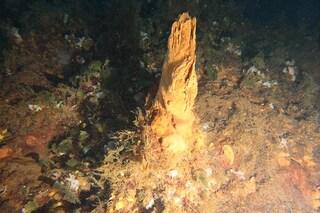 Sotto le Eolie c'è un sito idrotermale unico nel Mediterraneo: cos'è la Smoking Land