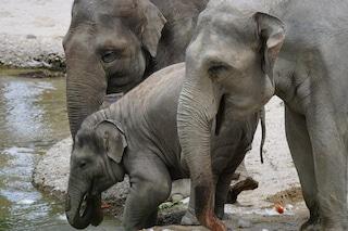 Perché anche tu potresti essere un elefante