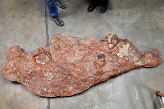 C'è un dinosauro nel parcheggio della NASA: trovate impronte fossili uniche
