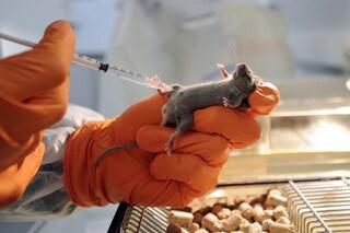 Stop sperimentazione animale grazie a italiani: l'obesità si studia sull`uomo