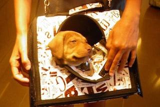Quanti cani devono ancora morire prima di permetterci di tenerli vicino a noi in aereo?