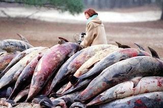 Uccisi 'senza motivo' 6.000 delfini in tre mesi in Francia: cronaca di un massacro