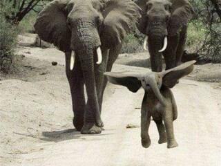 Dumbo esiste e salta felice? Peccato che gli elefanti non possano saltare