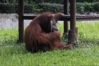 Ozon, l'orango che fuma nello 'zoo della morte' mentre la gente ride e non capisce il dramma
