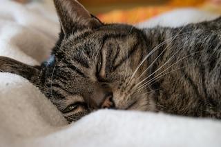 Cinque falsi miti sul sonno che devi conoscere per dormire meglio