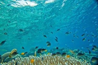 Afrodisiaco e antiossidante: dal cetriolo di mare al pesce coniglio, il cibo del futuro è nell'oceano