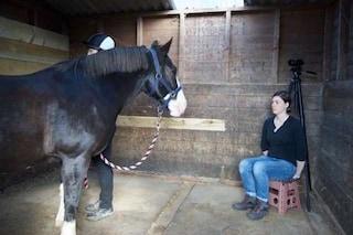 I cavalli ricordano le nostre espressioni facciali e modificano il comportamento di conseguenza