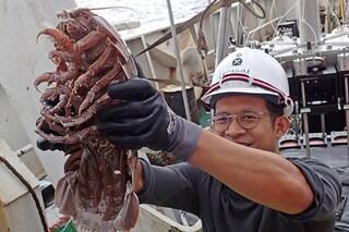 Assurdi crostacei emergono dagli abissi: le foto delle nuove specie dell'Oceano Indiano