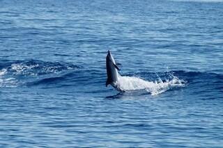 Anche i delfini muoiono di morbillo per colpa nostra: colpiti da malattie infettive 'umane'