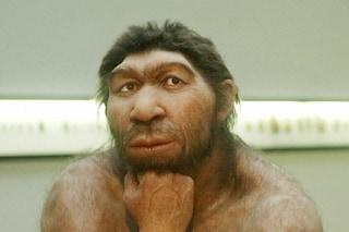 L'uomo di Neanderthal aveva un grande naso per respirare meglio nell'ostile ambiente glaciale