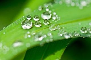 Acqua dall'aria con un foglio 'speciale' ispirato alle piante tropicali e al riso
