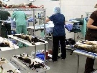 Quei gattini torturati per il piacere delle donne sono l'ennesima, inaccettabile bufala