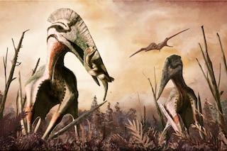 Pterosauro della Transilvania aveva un'apertura alare di 9 metri e una mascella gigantesca