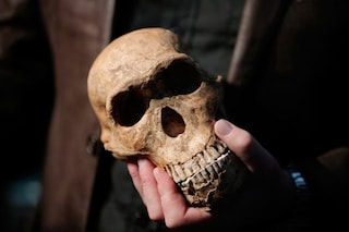 Aveva un cervello piccolo come un'arancia ma simile al nostro: chi era l'Homo naledi