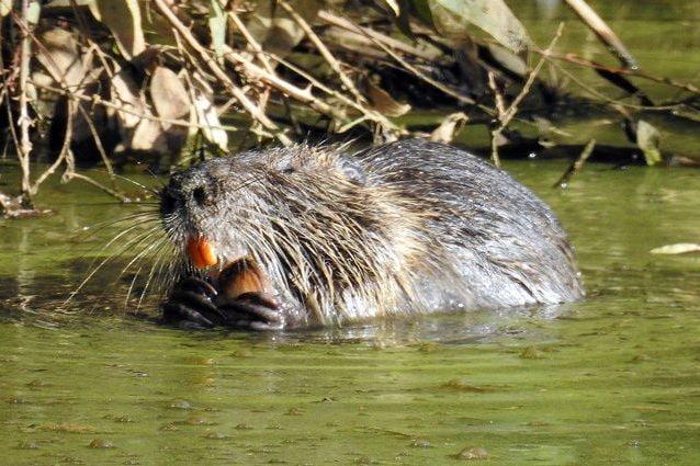 Risultati immagini per Giornata Internazionale per la Biodiversità