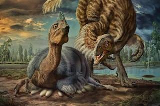 Finalmente sappiamo come i dinosauri giganti covavano le loro uova senza romperle