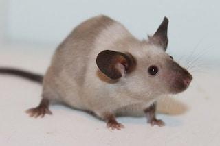 Gli animali ricordano il loro passato: questo porterà a nuove cure contro l'Alzheimer