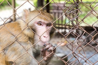 Gli animali imprigionati dall'uomo hanno organi modificati e non è una buona notizia