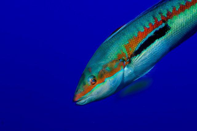 EUO © OCEANA / JUAN CUETUS