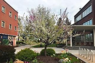 Questo albero produce 40 frutti diversi ed è un capolavoro che unisce arte e natura