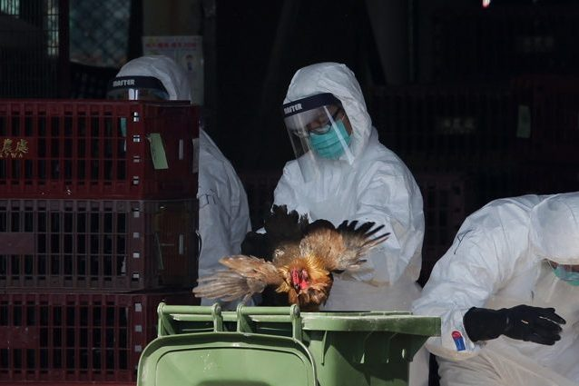 Castel Volturno. Sospetto virus aviaria al Pineta Grande, chiuso il pronto soccorso