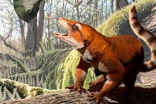 Cifelliodon wahkarmoosuch, il mammifero-rettile potrebbe riscrivere la storia dei continenti