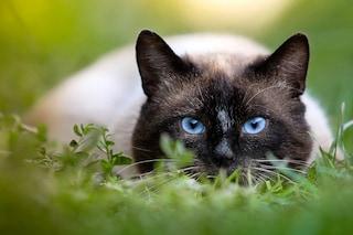 Come gli animali vedono il mondo: dai cani ai gatti, passando per uccelli e farfalle