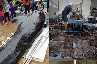 Balena pilota uccisa da 80 sacchi di plastica nello stomaco: morta tra atroci sofferenze