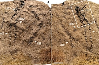Queste sono le impronte fossili più antiche mai scoperte: hanno 550 milioni di anni